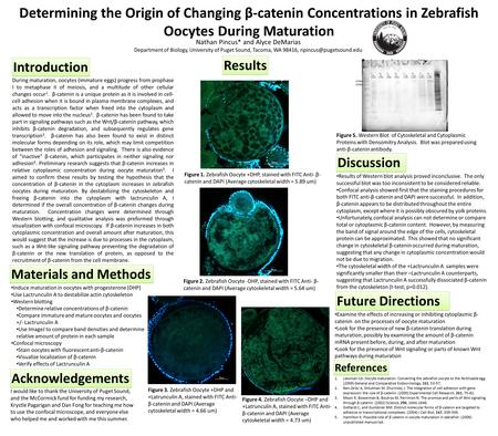 Determining the Origin of Changing β-catenin Concentrations in Zebrafish Oocytes During Maturation Nathan Pincus* and Alyce DeMarias Department of Biology,