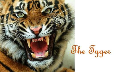 The Tyger. The Tyger by: William Blake Tyger Tyger, burning bright, In the forests of the night; What immortal hand or eye, Could frame thy fearful symmetry?