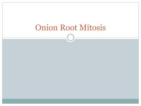 Onion Root Mitosis. Background In plants, the roots grow as they search for water and nutrients. These regions of growth are good for studying the cell.