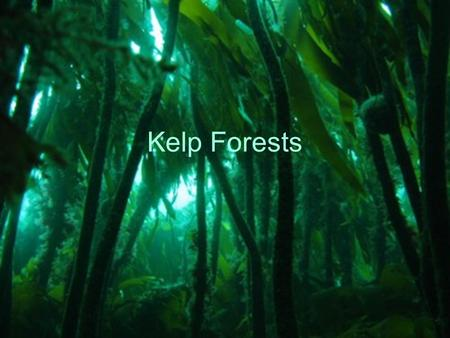 Kelp Forests. What? The kelp forest is a forest, but it is not a forest of trees. It is made of seaweed called giant kelp. Only kelp plants with air bladders.