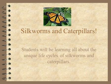 Silkworms and Caterpillars! Students will be learning all about the unique life cycles of silkworms and caterpillars.