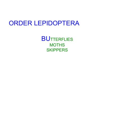 ORDER LEPIDOPTERA BU TTERFLIES MOTHS SKIPPERS. Do not Collect Monarchs or Swallowtails. The Caterpillars can be caught and brought in alive for credit!