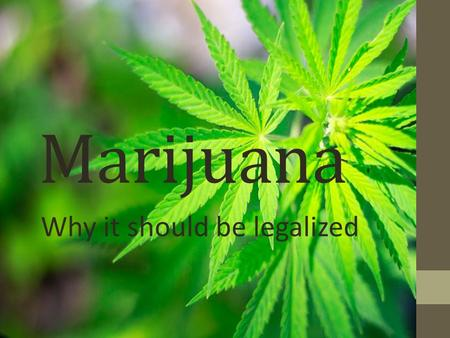 thesis statements on marijuana Free research that covers introduction cannabis sativa is a drug that is most commonly known by people with the name of marijuana the legalization of marijuana.