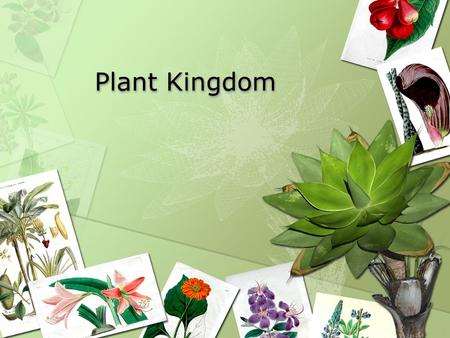 Plant Kingdom. Plants on land Plants are the most dominant group or organisms on Earth by weight Very diverse 2mm across to 100m tall Most are photosynthetic.