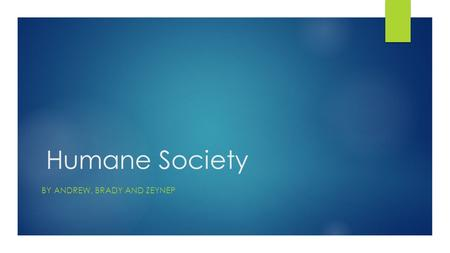 Humane Society BY ANDREW, BRADY AND ZEYNEP Goal  The goal of humane society is to help animals and give them new homes and also to find abandoned animals.