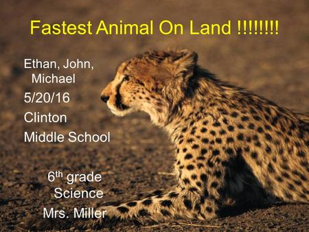 Fastest Animal On Land !!!!!!!! Ethan, John, Michael 5/20/16 Clinton Middle School 6 th grade Science Mrs. Miller.