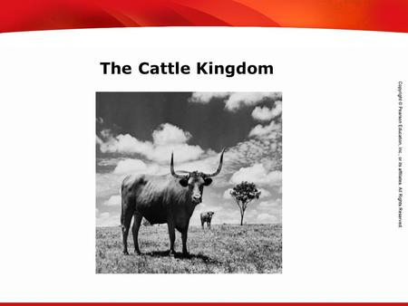 TEKS 8C: Calculate percent composition and empirical and molecular formulas. The Cattle Kingdom.