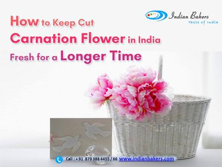 How to keep cut carnation flower in India fresh for a longer time? Carnation Flowers Delivery