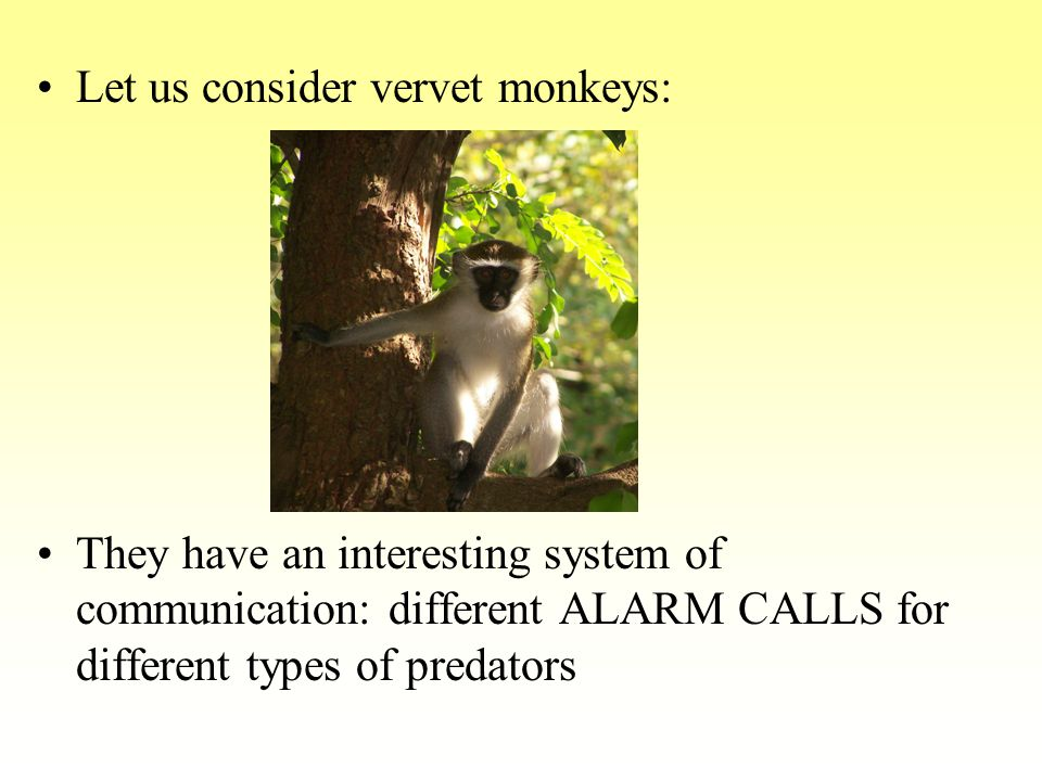 TYPE I – alarm call signalling the presence of a SNAKE: A vervet gives one call when it sees a snake.