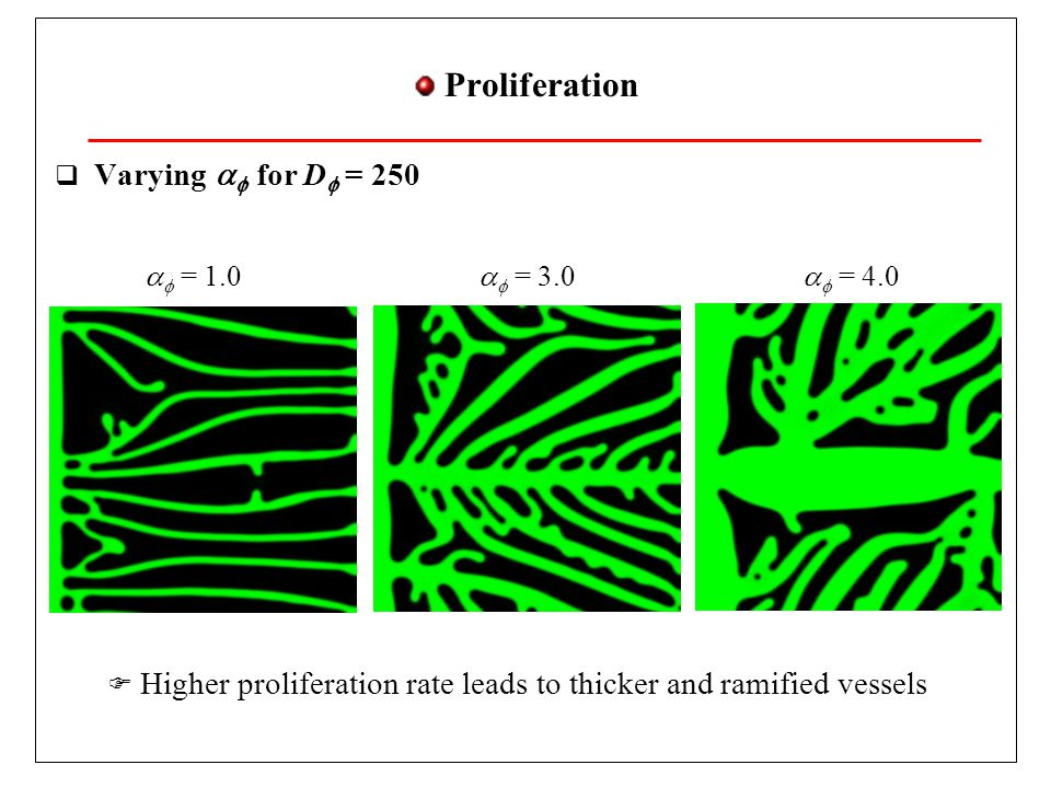 Chemotaxis  Varying D   for   = 3.0  Higher tip cell velocity leads to thinner and more ramified vessels D  = 100D  = 300D  = 400