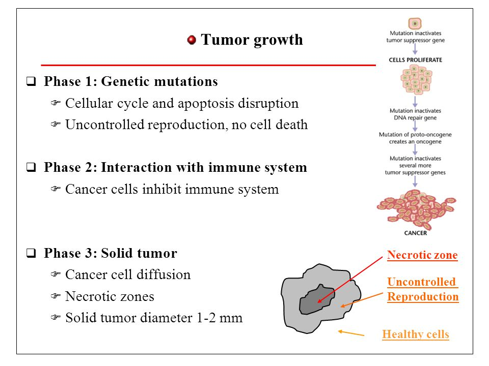 Angiogenesis and Metastasis  Tumor growth requires nutrients  Active nutrient search  Phase 4: Angiogenesis  Segregation of proteins which promote blood vessel growth  Aberrant vascular network  Phase 5: Metastasis  Cancer cells enter in blood network  New colonies in healthy regions M.