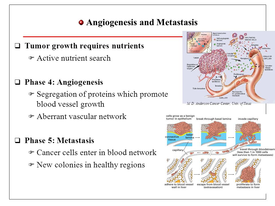 Tumor Topics  Cancer cells ' uncontrolled reproduction  Genetic material diversity  Large adaptability  Tumor surroundings are extremely hostile  Host destruction is adaptation victory  Fragile blood vessels  A tumor bleeds  Continuous angiogenesis  A tumor is a wound which does not heal