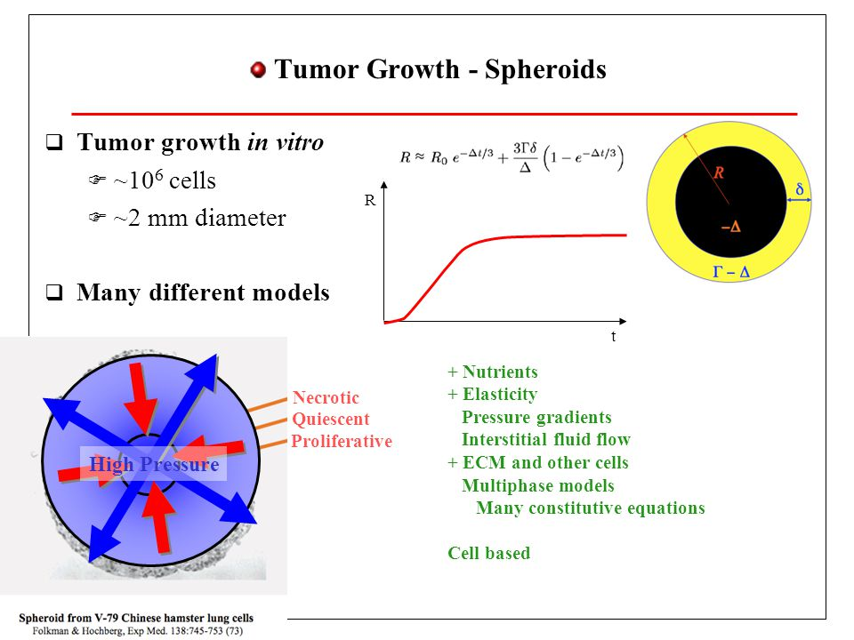 Tumor Growth - Cadherin Switch - Permeable Phenotype  E-Cadherin connect nearby cells of epithelium  Proliferation regulated by E-cadherin signal pathway  In case of failure may lead to uncontrolled proliferation  Cadherin switch at the onset of solid tumor growth  Motile tumor cells  Move in search for nutrients  Metastasis