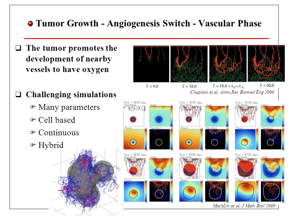 Tumor Growth - Competition - Evolution  Deregulated proliferation  Mutations  Darwin selection  Metabolism and migration  Anaerobic matabolism  2 ATP instead of 36  No need of Oxygen  Produces acid  Helps migration  Prevailing phenotype  Acid resistant Gerlee, Anderson, J Theor Biol 2007 Acid