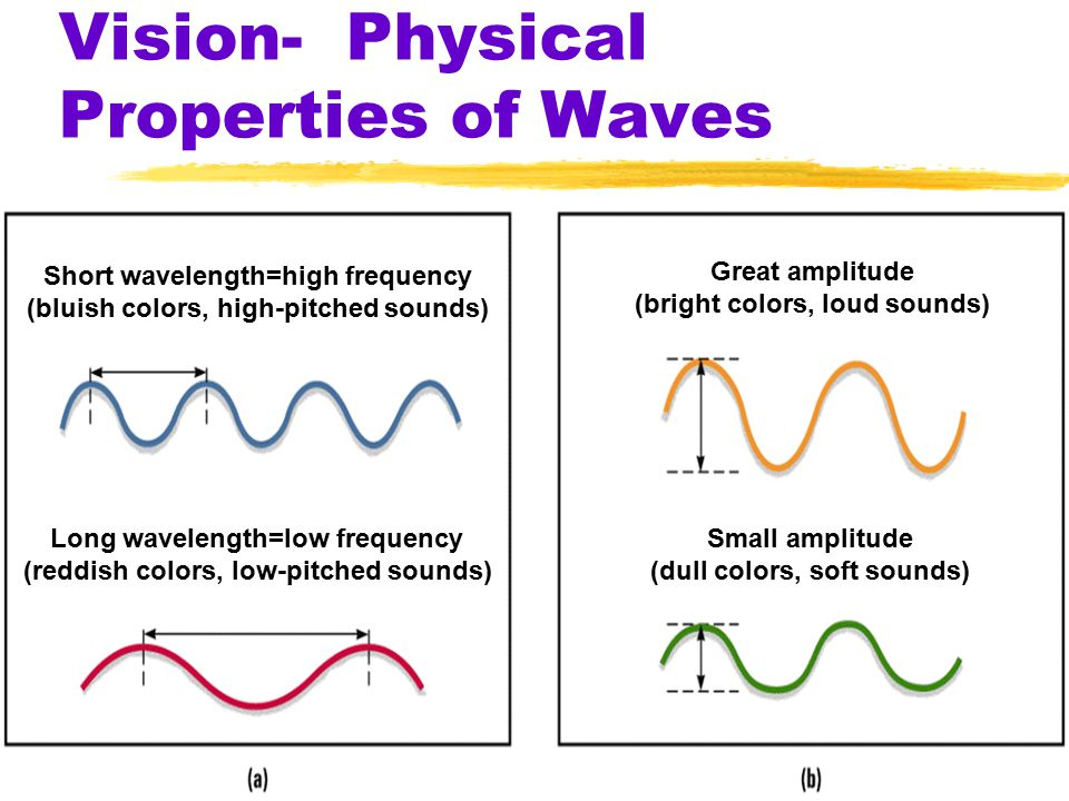 Vision- Physical Properties of Waves Short wavelength=high frequency (bluish colors, high-pitched sounds) Long wavelength=low frequency (reddish colors, low-pitched sounds) Great amplitude (bright colors, loud sounds) Small amplitude (dull colors, soft sounds)