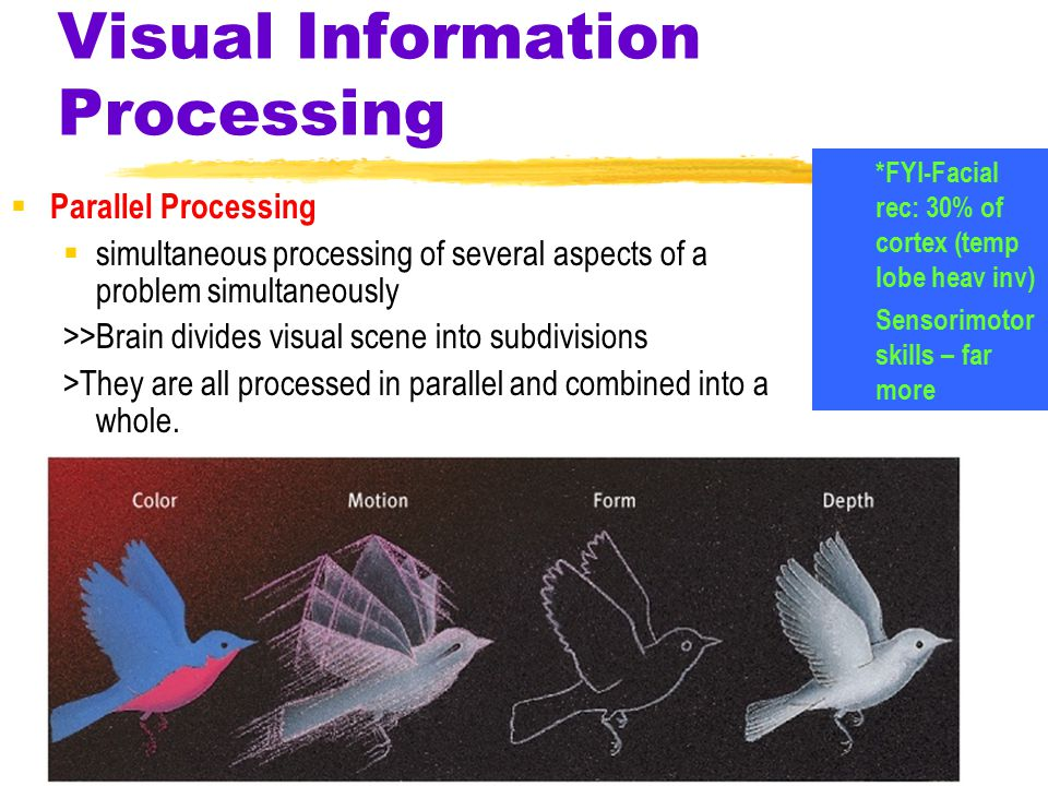 Visual Information Processing  Parallel Processing  simultaneous processing of several aspects of a problem simultaneously >>Brain divides visual scene into subdivisions >They are all processed in parallel and combined into a whole.