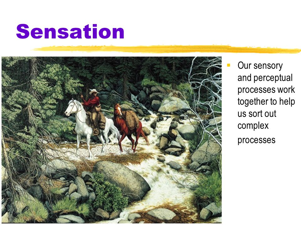 Sensation  Our sensory and perceptual processes work together to help us sort out complex processes