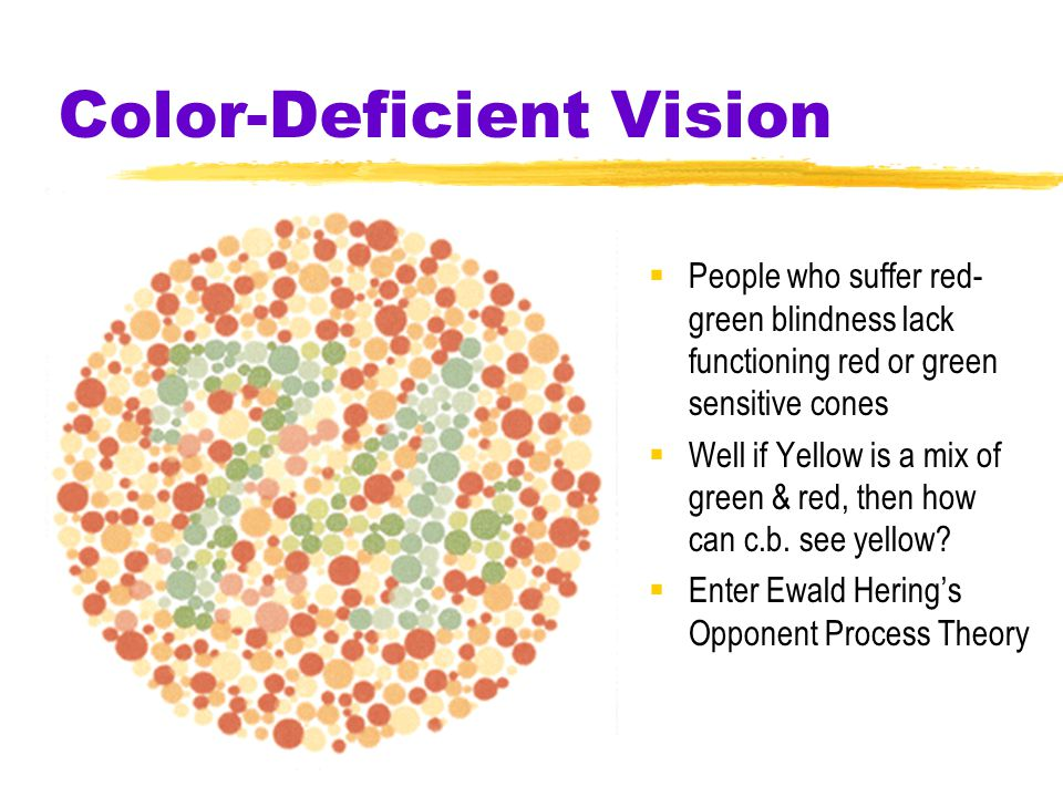 Color-Deficient Vision  People who suffer red- green blindness lack functioning red or green sensitive cones  Well if Yellow is a mix of green & red, then how can c.b.
