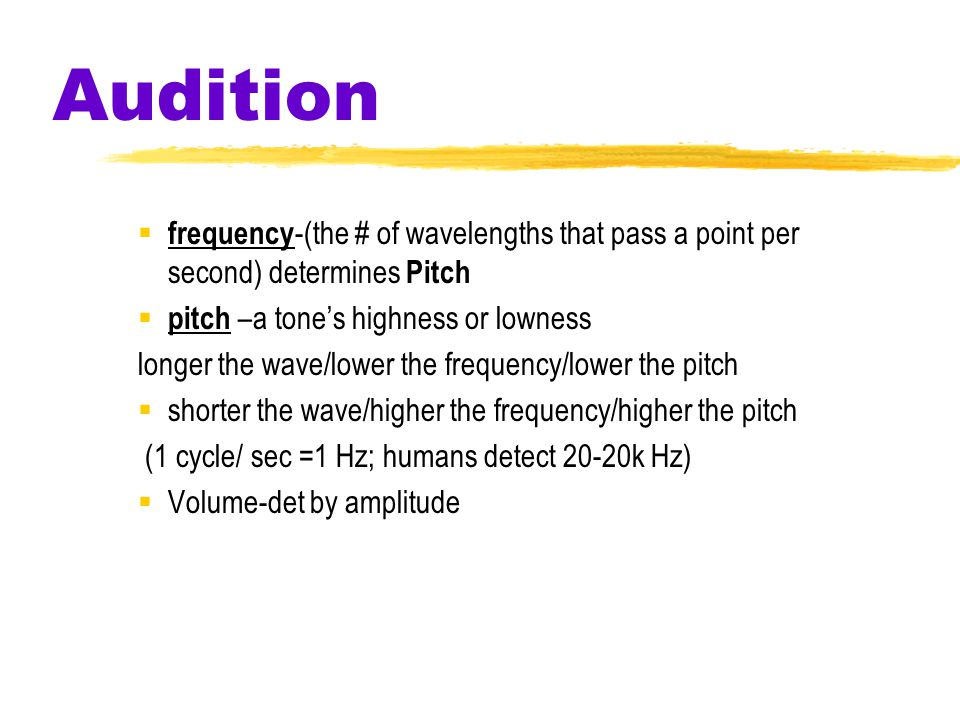 Audition  frequency -(the # of wavelengths that pass a point per second) determines Pitch  pitch –a tone's highness or lowness longer the wave/lower the frequency/lower the pitch  shorter the wave/higher the frequency/higher the pitch (1 cycle/ sec =1 Hz; humans detect 20-20k Hz)  Volume-det by amplitude
