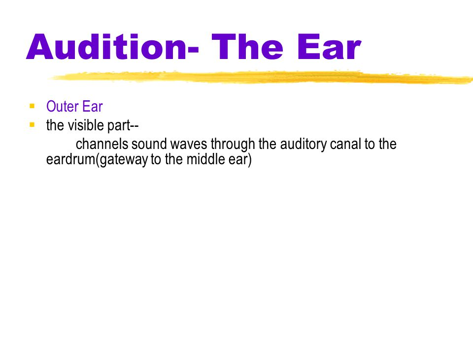 Audition- The Ear  Outer Ear  the visible part-- channels sound waves through the auditory canal to the eardrum(gateway to the middle ear)