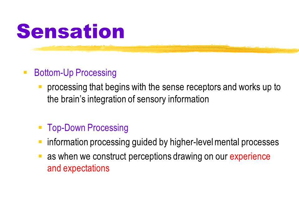 Sensation  Bottom-Up Processing  processing that begins with the sense receptors and works up to the brain's integration of sensory information  Top-Down Processing  information processing guided by higher-level mental processes  as when we construct perceptions drawing on our experience and expectations