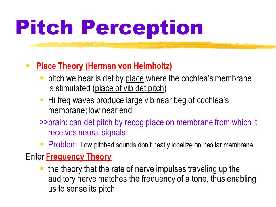 Pitch Perception  Place Theory (Herman von Helmholtz)  pitch we hear is det by place where the cochlea's membrane is stimulated (place of vib det pitch)  Hi freq waves produce large vib near beg of cochlea's membrane; low near end >>brain: can det pitch by recog place on membrane from which it receives neural signals  Problem: Low pitched sounds don't neatly localize on basilar membrane Enter Frequency Theory  the theory that the rate of nerve impulses traveling up the auditory nerve matches the frequency of a tone, thus enabling us to sense its pitch