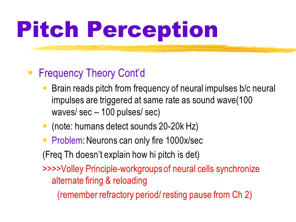 Pitch Perception  Frequency Theory Cont'd  Brain reads pitch from frequency of neural impulses b/c neural impulses are triggered at same rate as sound wave(100 waves/ sec – 100 pulses/ sec)  (note: humans detect sounds 20-20k Hz)  Problem: Neurons can only fire 1000x/sec (Freq Th doesn't explain how hi pitch is det) >>>>Volley Principle-workgroups of neural cells synchronize alternate firing & reloading (remember refractory period/ resting pause from Ch 2)