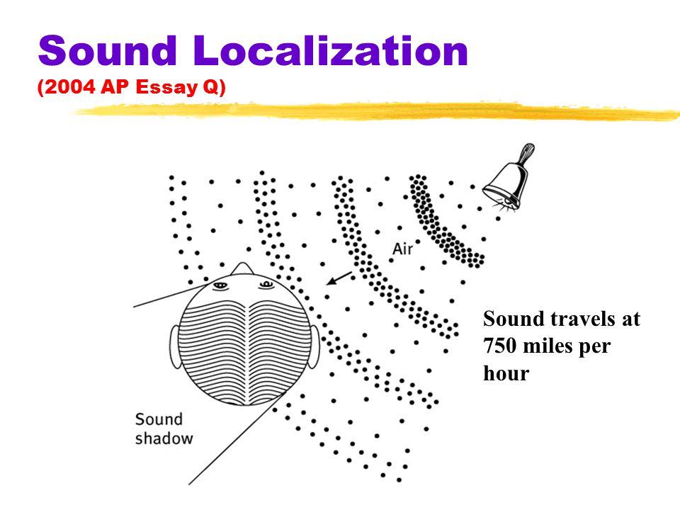 Sound Localization (2004 AP Essay Q) Sound travels at 750 miles per hour