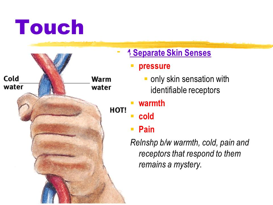 Touch  4 Separate Skin Senses  pressure  only skin sensation with identifiable receptors  warmth  cold  Pain Relnshp b/w warmth, cold, pain and receptors that respond to them remains a mystery.