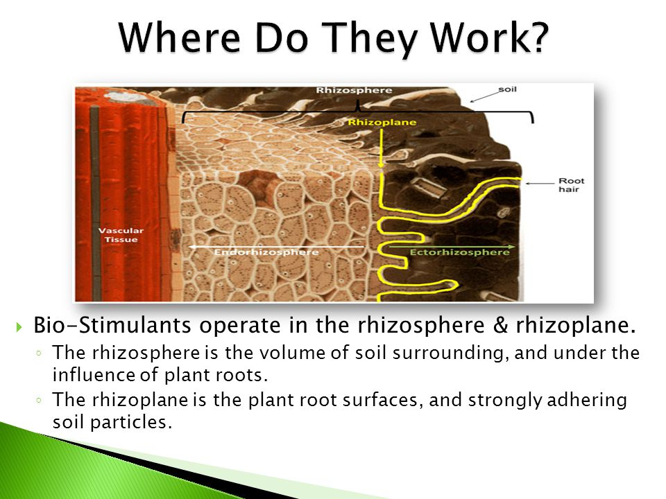  Improves Soil Biology ◦ Healthy Soil Is…  Rich in nutrients necessary for plant nutrition.