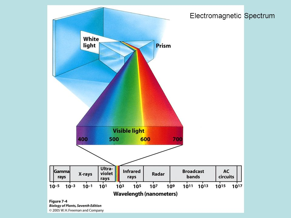 Light Wave model –All radiation travels in waves with distinctive wavelengths Particle model –Albert Einstein 1905 Particles of energy compose light (photons) Energy of a photon is inversely proportional to its wavelength (longer wavelength, lower energy)
