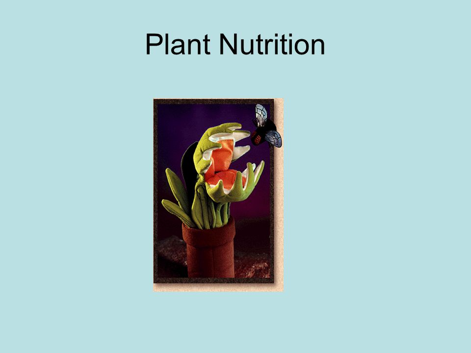Macronutrients Sulfur: soil Phosphorous: soil Calcium: soil Potassium: soil Nitrogen: soil/fungi Oxygen: air, water Carbon: air and soil Hydrogen: air