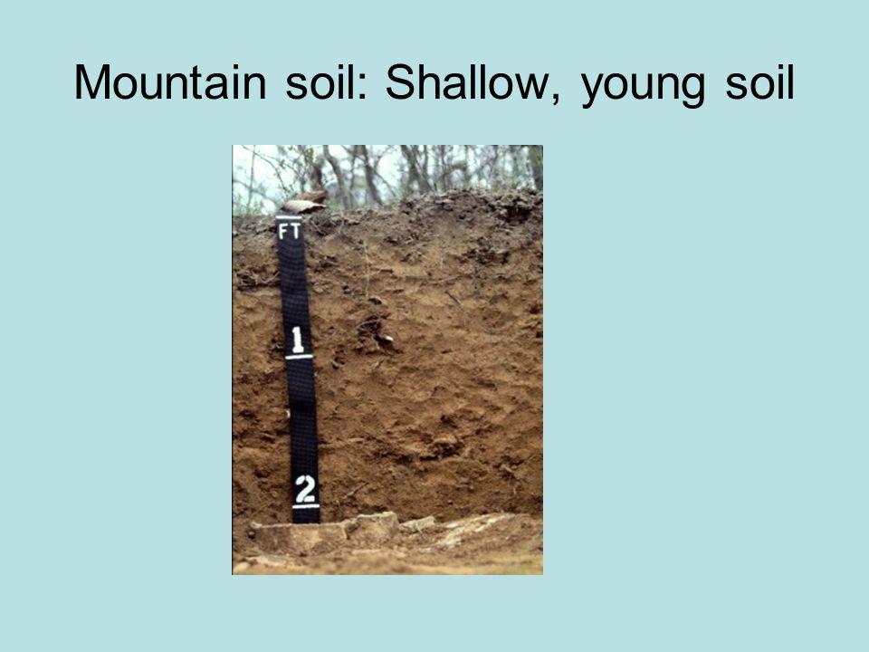 Piedmont Soil: Dark grey sandy loam toplayer, Red clay subsoil