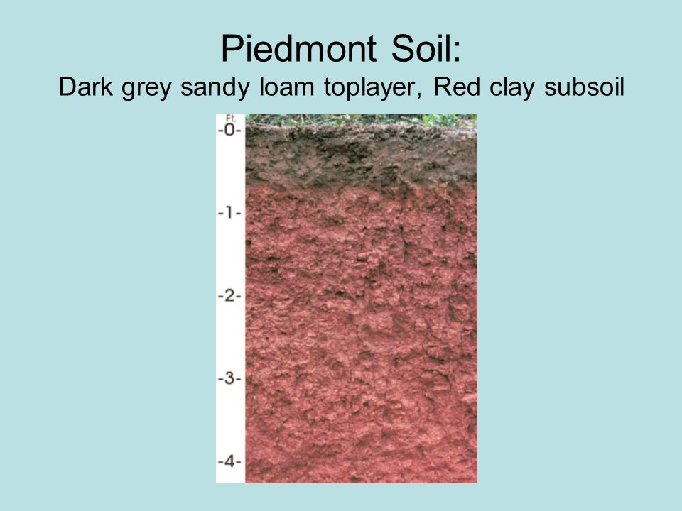 Coastal soil: Very sandy