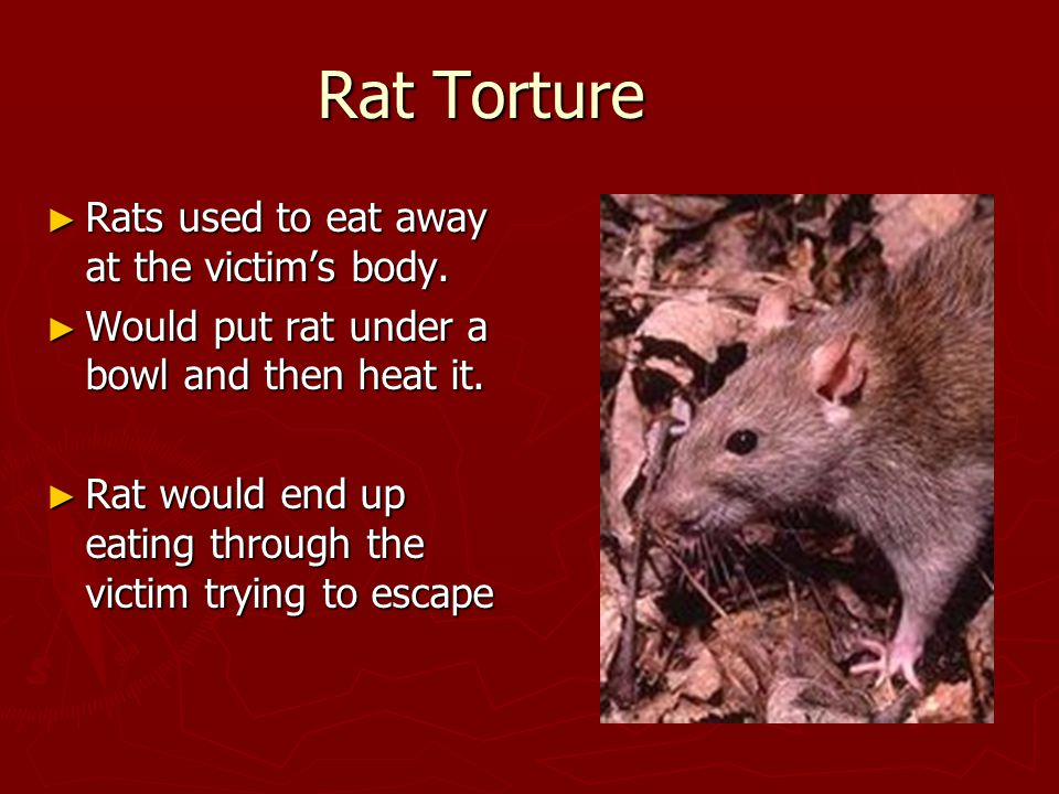 Rat Torture ► Rats used to eat away at the victim's body.