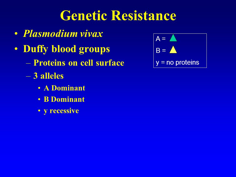 Genetic Resistance Plasmodium vivax Duffy blood groups –Proteins on cell surface –3 alleles A Dominant B Dominant y recessive A = B = y = no proteins AB yy AA BB Ay By
