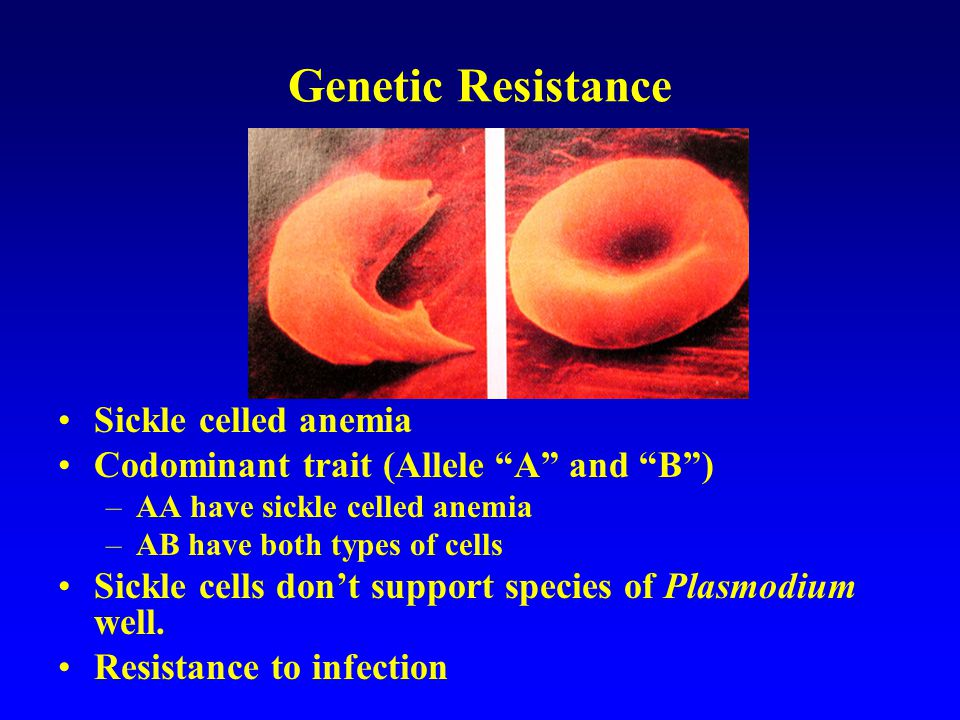 Genetic Resistance AA selected against –Sickle celled anemia AB selected for –Both sickle and normal cells BB selected against –Normal cells If malaria not endemic, what alleles will be selected for.
