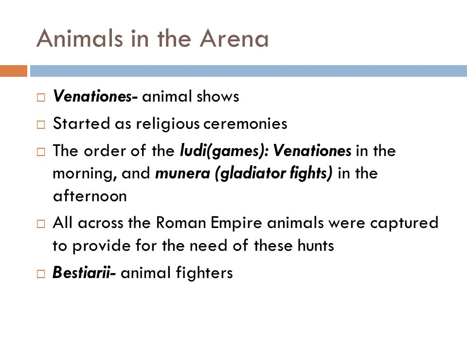 Animals in the Arena  Venabulum- single long-bladed spear  Sagittarii- bow and arrows  These fighters took pride in their scars  First form of matadors, like the traditional bull fighting in Spain  Androcles and the Lion