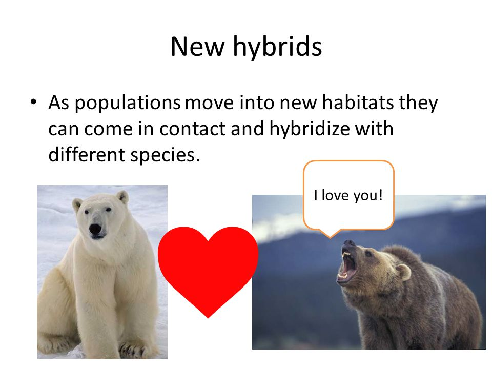 Example: Arctic mammals Melting arctic ice removes barrier that previously separated species.
