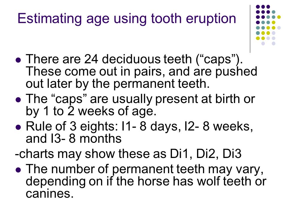 Aging - Incisors Deciduous eruption pattern: Central @ 6-8 days Middle @ 6-8 weeks Corner @ 6-8 months Premolar eruption pattern: PM 2 @ 2 years 8 months PM 3 @ 2 years 10 months PM 4 @ 3 years 8 months Permanent eruption pattern: Central @ 2.5 years Middle @ 3.5 years Corner @ 4.5 years Molar eruption pattern: M1 @ 1 year M2 @ 2 years M3 @ 3 - 4 years