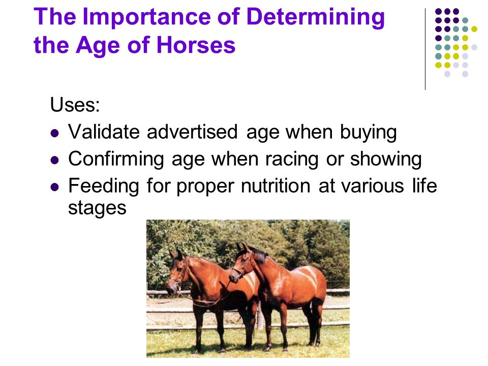 Aging by Teeth Not foolproof An art that requires skill and experience Very old method of aging horses Error increases with horse's age Becomes an educated guess after horse is older than 14 years Stabled horses tend to appear younger (less tooth wear) Pastured horses tend to appear older (more tooth wear) Bishoping- altering teeth to hide age