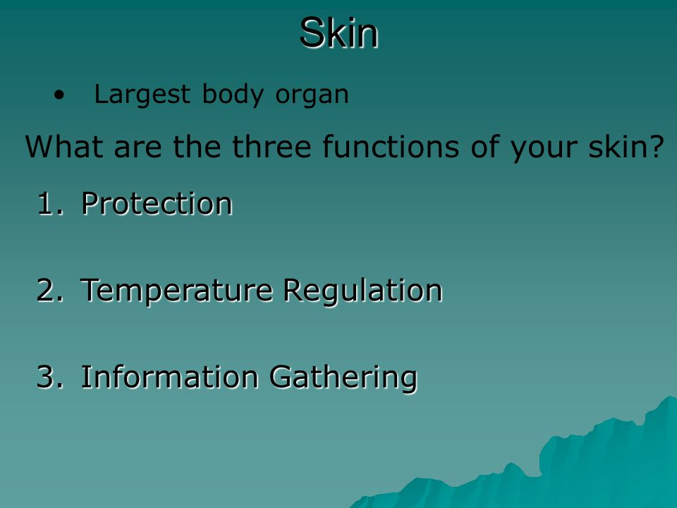 Your Skin How does you skin regulate body temperature.