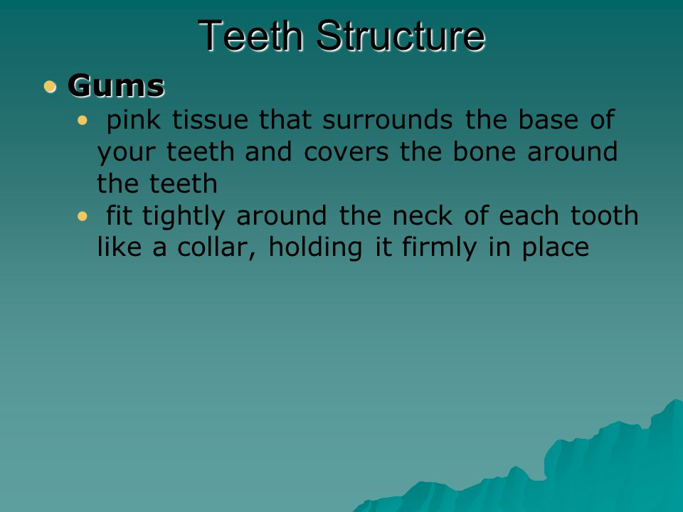Teeth Structure Crown Neck Root Blood vessels Root canal Cementum Nerve Gum Pulp Dentin Enamel