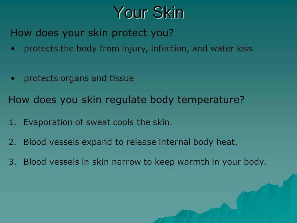 Your Skin How does your skin gather information.