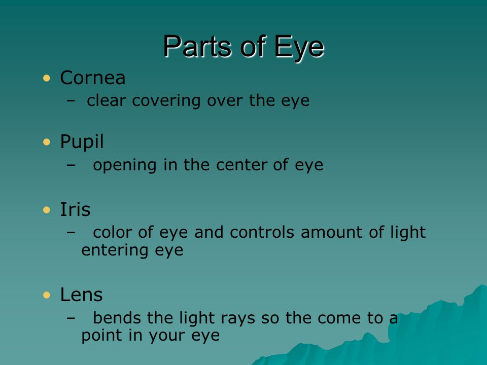Parts of Eye Retina – – Layer of cells that line the back of the eye   Rods – – distinguish black and white   Cones – – distinguish colors Sclera – – white outer part of eye Optic Nerve – – takes nerve impulses to the brain