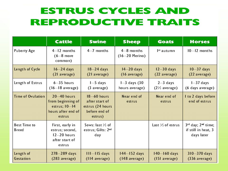 Detecting Estrus In order to insure high conception rates, the artificial insemination technician must be able to detect when the female is in estrus or heat.