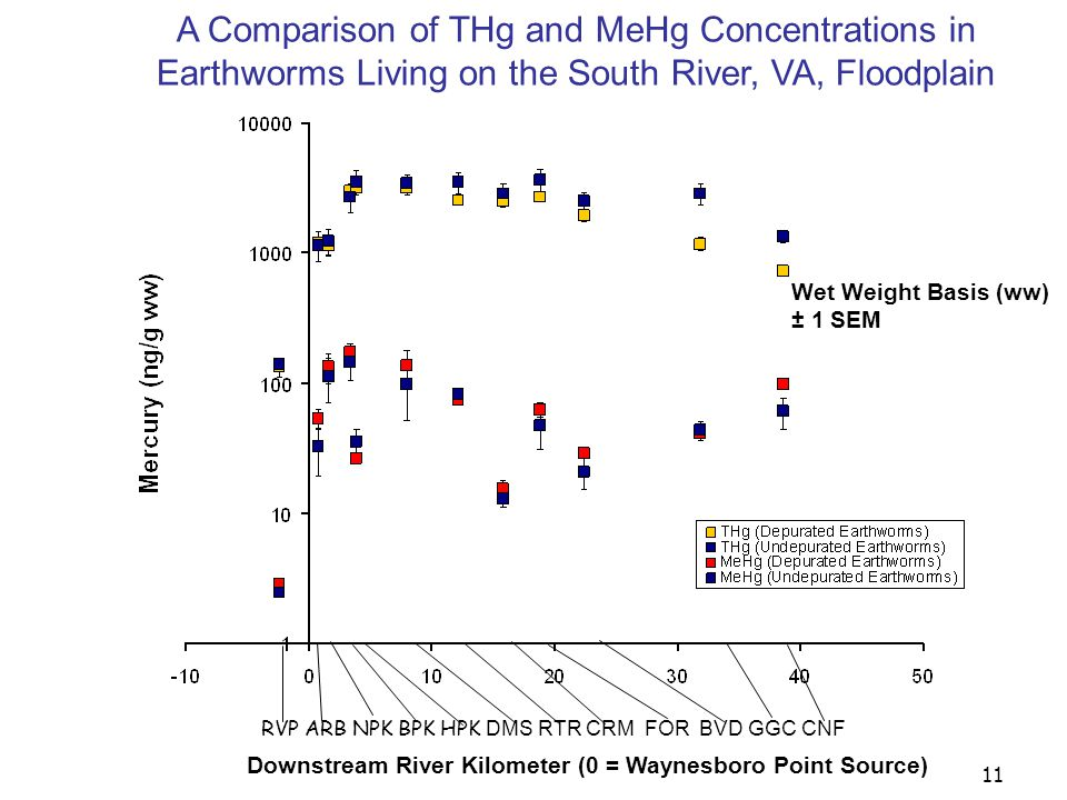 12 Wet Weight Basis (ww) THg in Soil of the South River, VA, Floodplain RVP ARB NPK BPK HPK DMS RTR CRM FOR BVD GGC CNF Downstream River Kilometer (0 = Waynesboro Point Source)