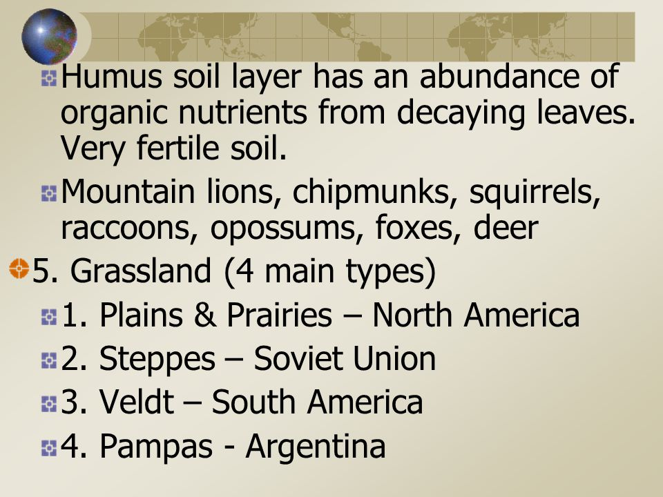 Humus soil layer has an abundance of organic nutrients from decaying leaves.