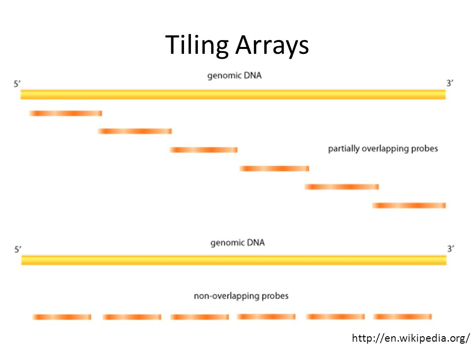 Typical applications: Comparitive Genomic Hybridization (aCGH) – copy number variation RNA analysis: transcript structure, transcript discovery, etc.