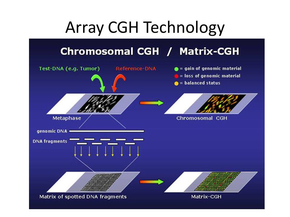Genome-wide measurement of DNA copy number alteration by array CGH Pollack J R et al.